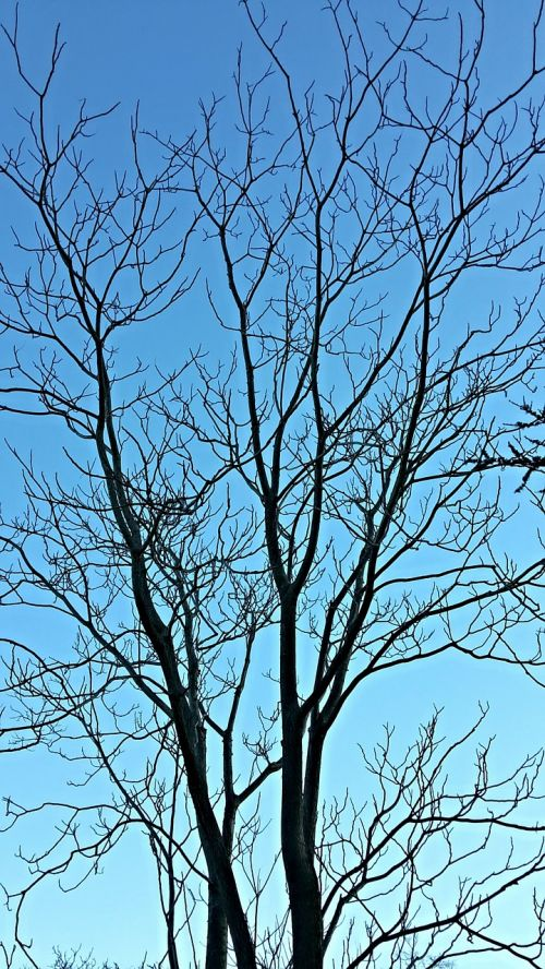 tree branches winter