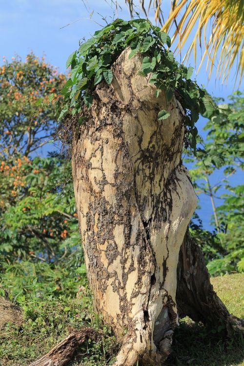 tree tribe dead