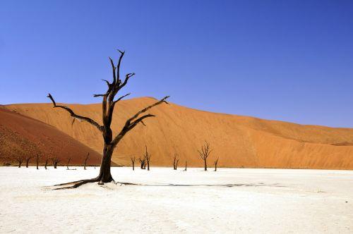 medis,dykuma,Namibija,miręs vlei,deadvlei,molio indelis,sausra,afrika,sausas,mirtis,smėlis,dangus,kopos,mėlynas,balta