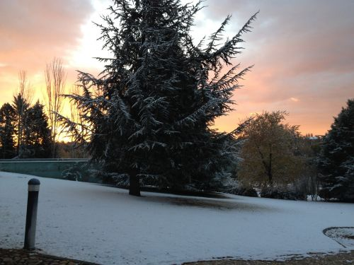 medis,sniegas,žiema,gamta,kraštovaizdis,snieguotas kelias,Nevada,snieguotas kraštovaizdis,aušra