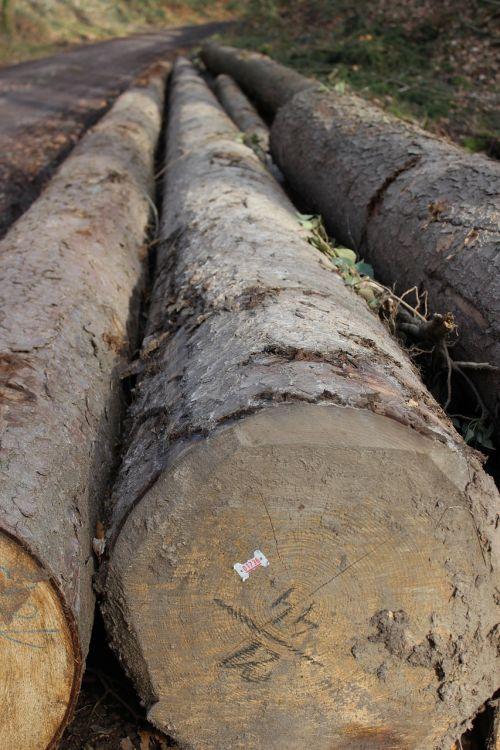 tree log bark