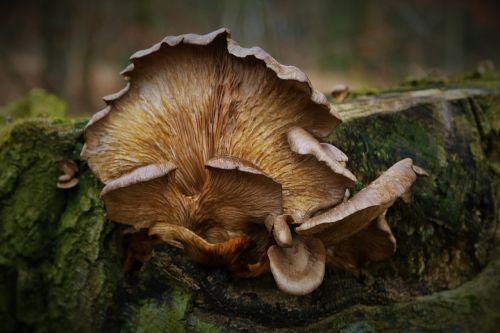 tree mushroom nature