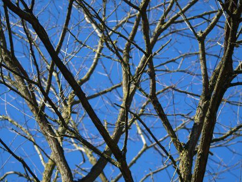 medis,negyvas augalas,senas,dangus,filialai,mediena,Waldsterbenas,aplinka,mis shapen,miręs medis,giraitė,estetinis