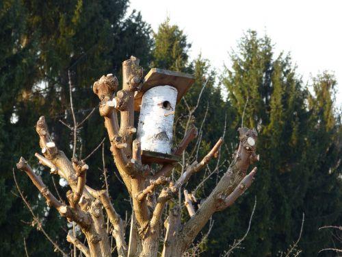 tree nest aviary