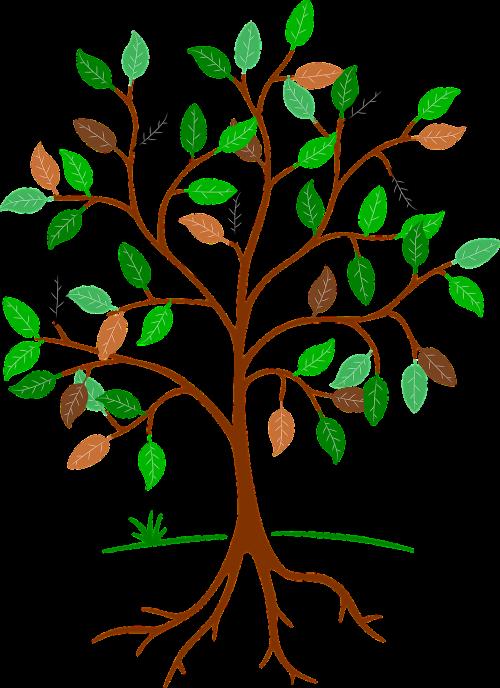 tree root aesthetic