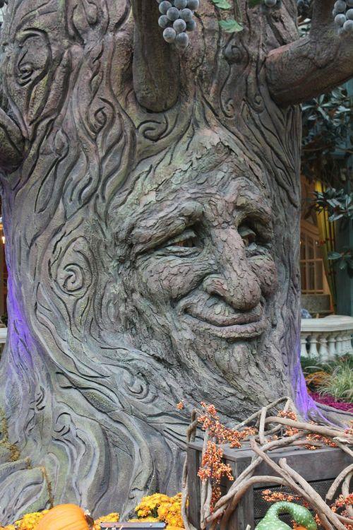 tree face tree face