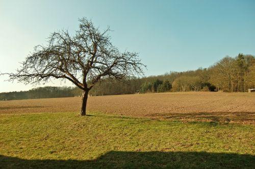 tree field sun
