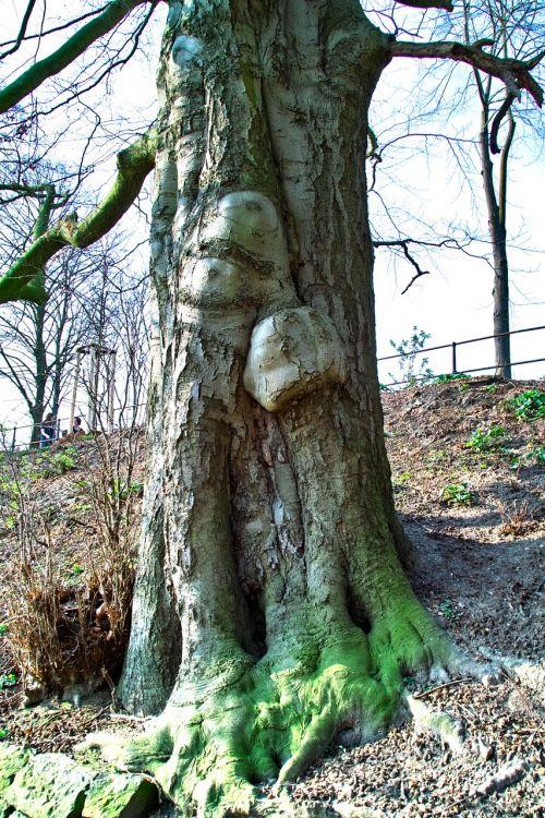 tree münster sunshine