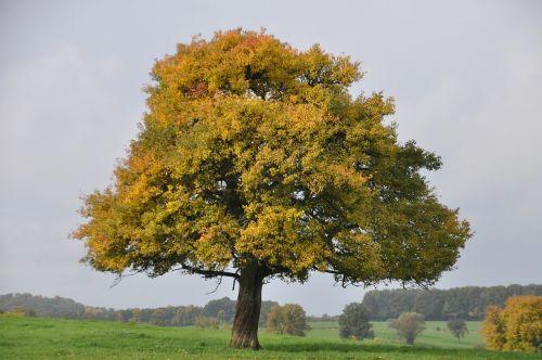 tree majestic autumn landscape