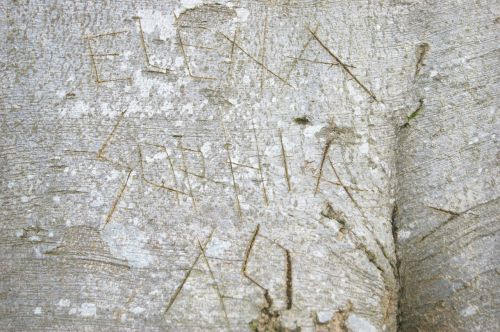 tree carvings wood