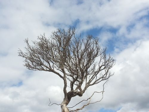 tree thyme clouds