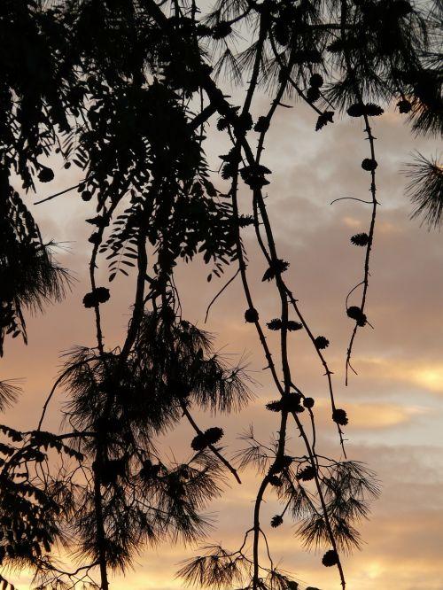tree branch abenstimmung