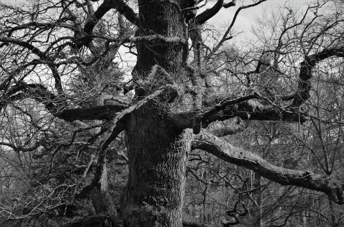 tree aesthetic old