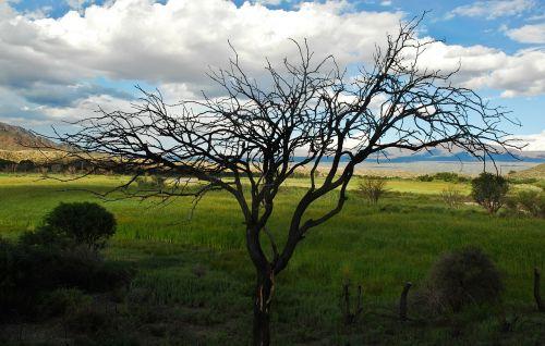 tree branches dark