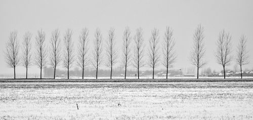 tree avenue in rural areas