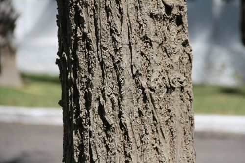 medis,bagažinė,gamta,mediena
