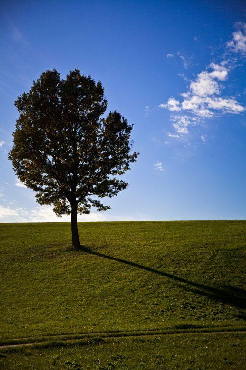 tree prato spring
