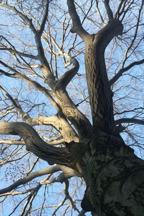 tree kahl aesthetic
