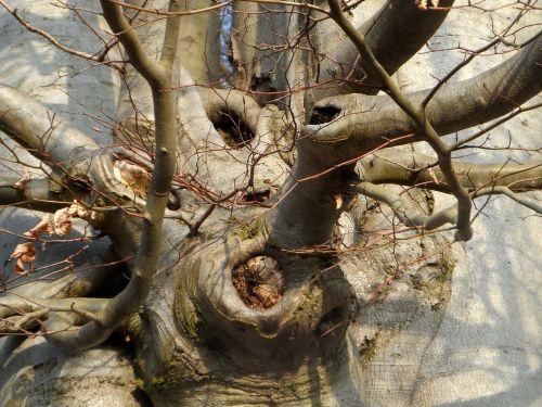 tree bush nature