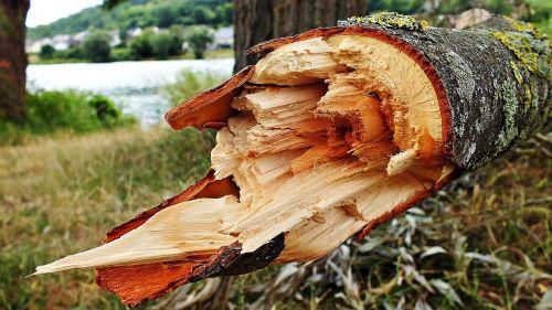 tree konar broken tree