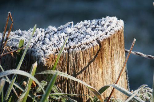tree winter hoarfrost