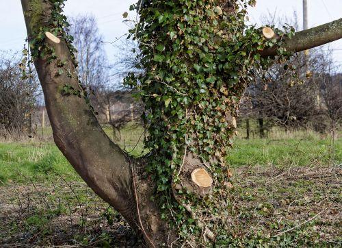 tree tree surgeon nature