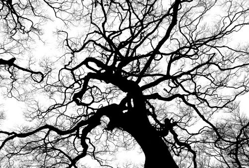 tree silhouette branches