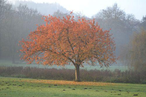 tree colors fall fall