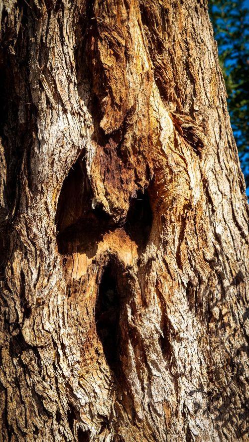 tree tribe fash