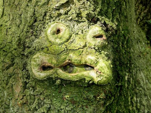 tree green face