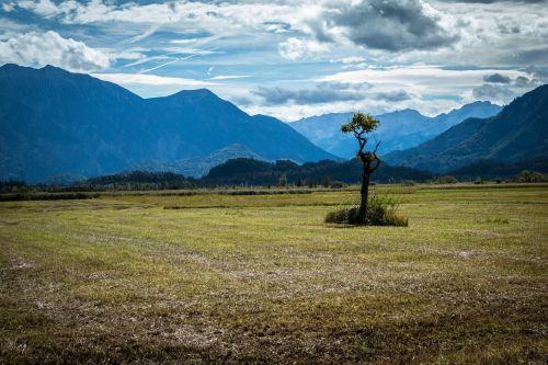 tree lonely moor