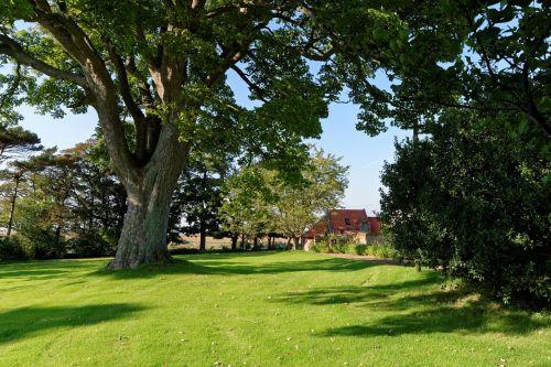 tree,lawn,grass,green,landscape,outdoor,garden,property,countryside,summer landscape,sunny,village,rural,nature,sky,scenic,beautiful landscape,leaves,background,landscape background,scenery