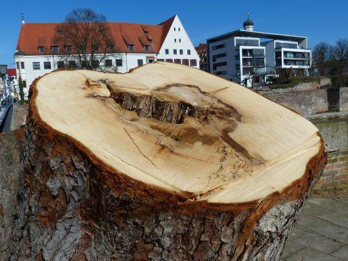 tree tree stump sawed off