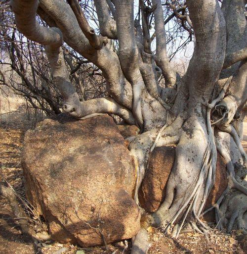 tree bark bush