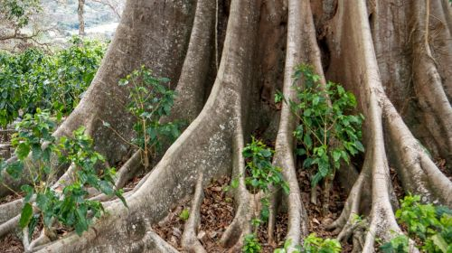 tree roots tree with roots
