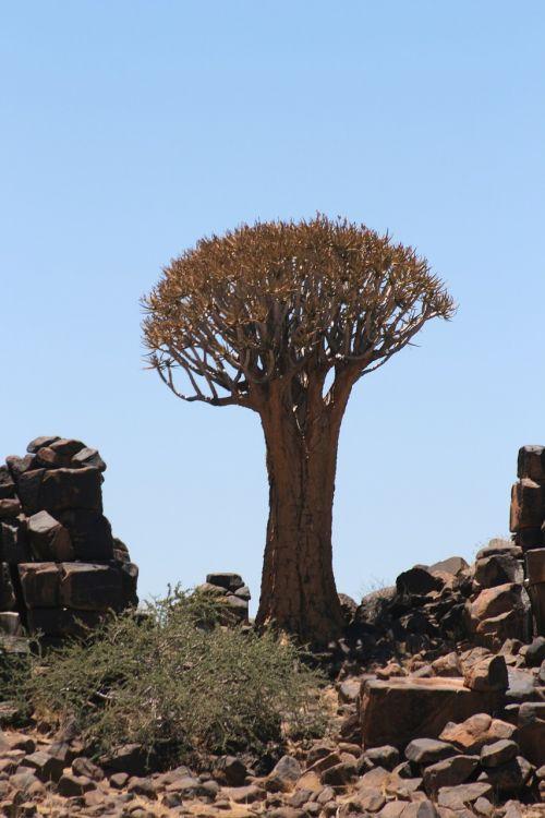 medis,Namibija,kraštovaizdis