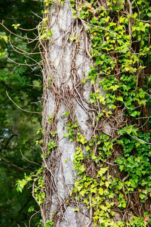 tree bark nature
