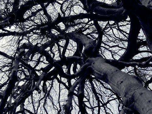tree shadow aesthetic