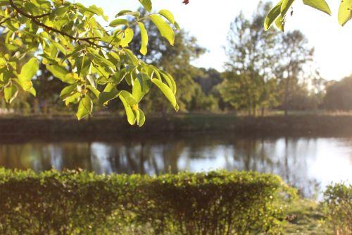 tree trees nature