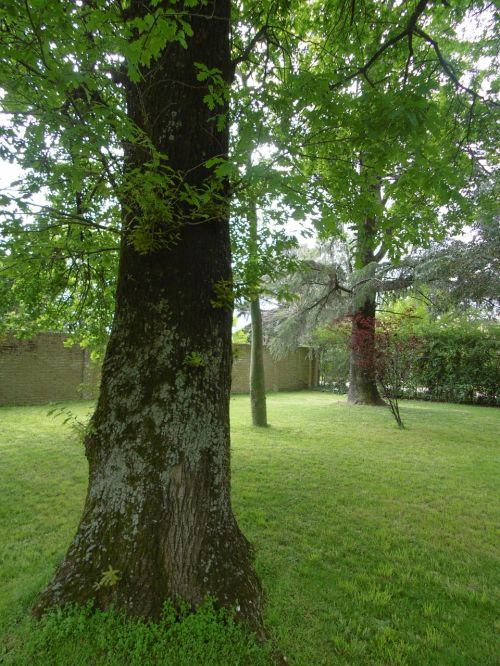 medis,gamta,bagažinė,žalias