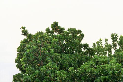 Tree Against Bleak Sky