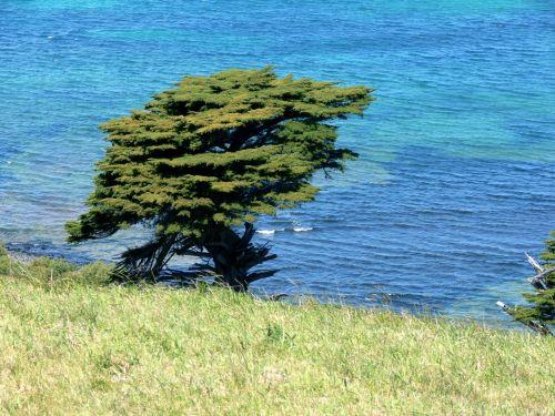 Tree At Water's Edge