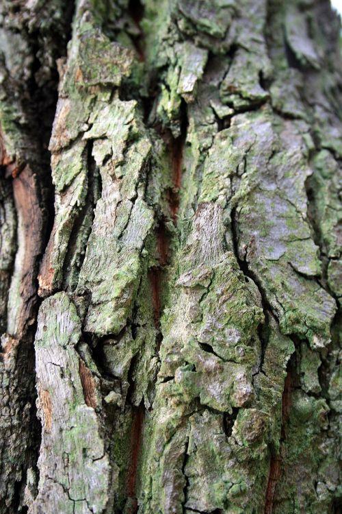 tree bark bark tree