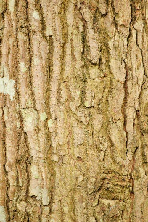 tree bark tree trunk tree surface
