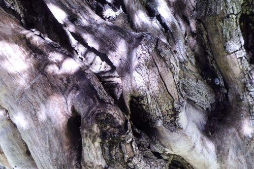 medžio žievė,bagažinė,gamta
