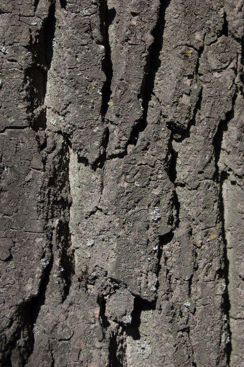 tree bark texture texture of tree bark