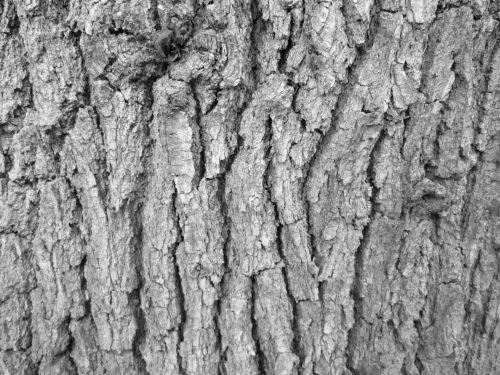 Tree Bark Texture 14