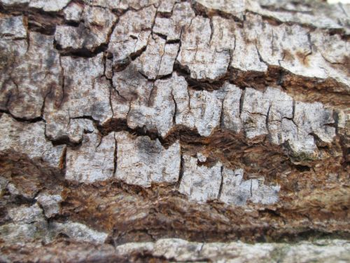 Tree Bark Texture 15