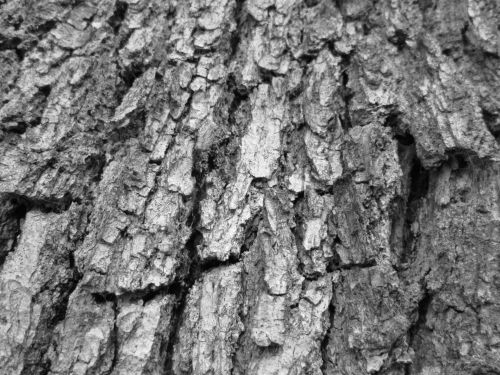 Tree Bark Texture 16