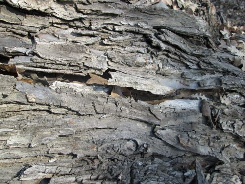 Tree Bark Texture 17